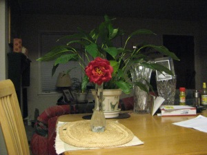 Camellia on the dinner table